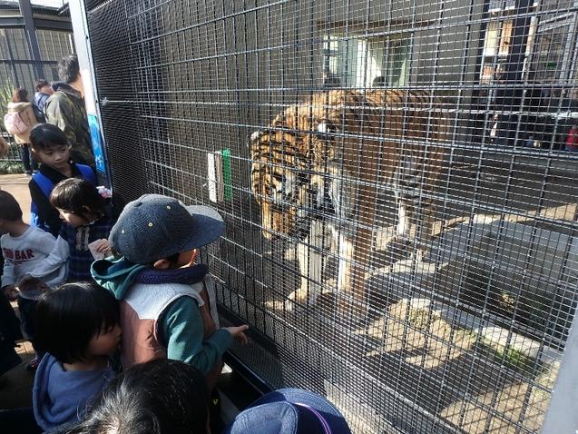京都市動物園★バイキング_c0113733_1302199.jpg