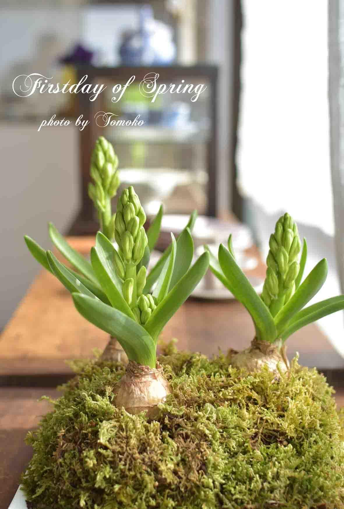 春の足音。。。_c0345348_01015751.jpg