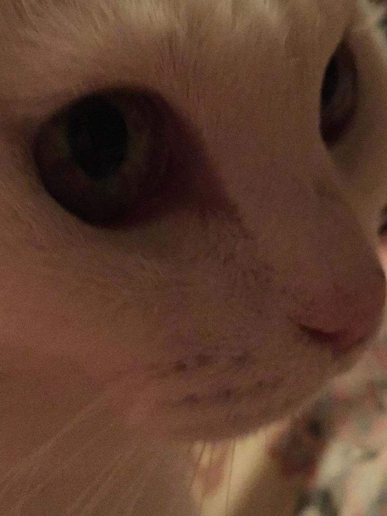 猫と_a0125981_19334419.jpg