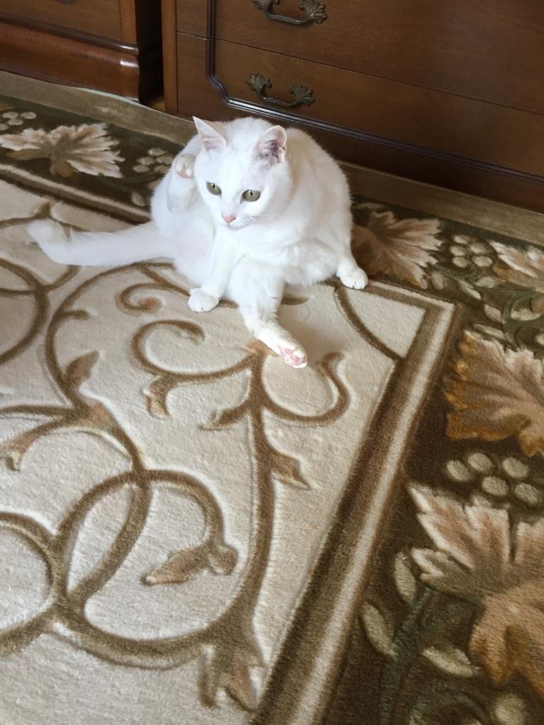 猫と_a0125981_19350136.jpg