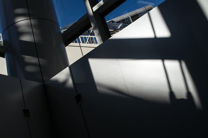 冬の総合文化施設に住む光蜥蜴_d0353489_18571618.jpg