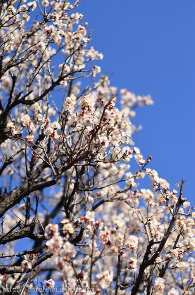 立春を迎えた庭あれこれ   My Garden Today_d0025294_19101057.jpg