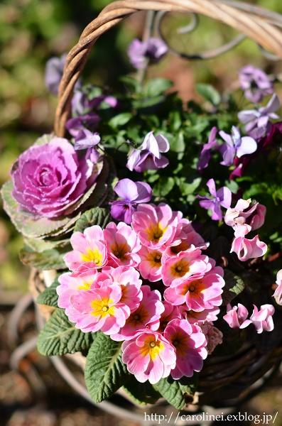立春を迎えた庭あれこれ   My Garden Today_d0025294_19105573.jpg