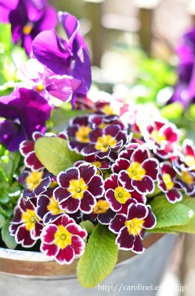 立春を迎えた庭あれこれ   My Garden Today_d0025294_19113231.jpg