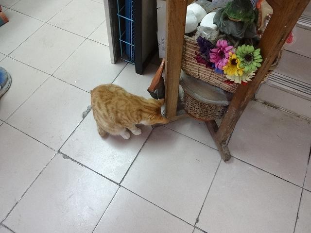 猫天国 森記圖書公司 _b0248150_04392556.jpg