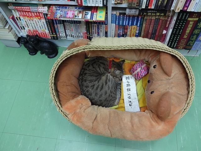 猫天国 森記圖書公司 _b0248150_04422866.jpg
