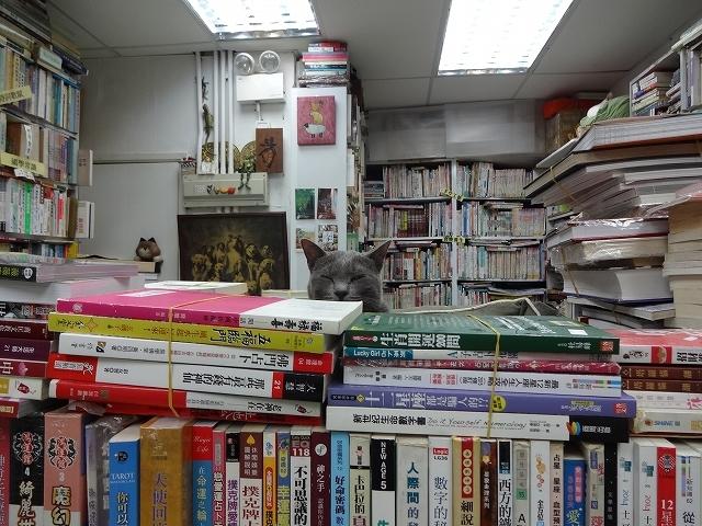 猫天国 森記圖書公司 _b0248150_04434363.jpg