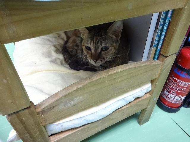 猫天国 森記圖書公司 _b0248150_04445153.jpg
