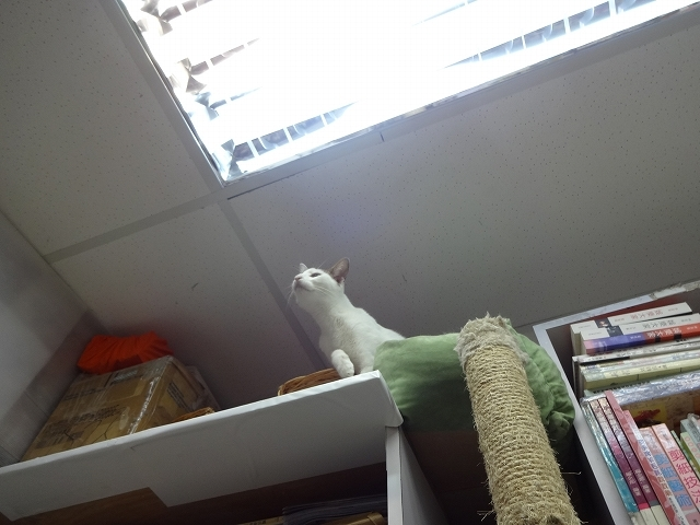 猫天国 森記圖書公司 _b0248150_04450980.jpg