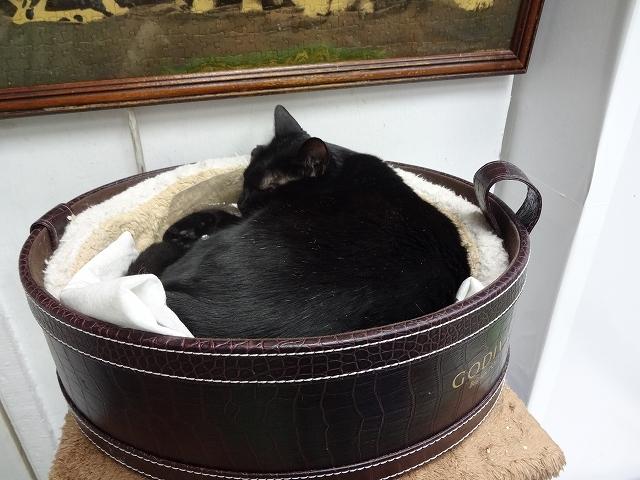 猫天国 森記圖書公司 _b0248150_04520542.jpg