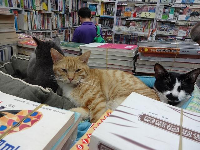 猫天国 森記圖書公司 _b0248150_04524901.jpg