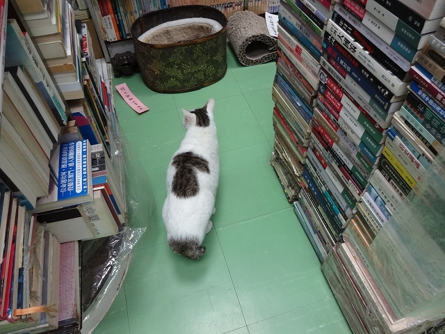 猫天国 森記圖書公司 _b0248150_04532652.jpg