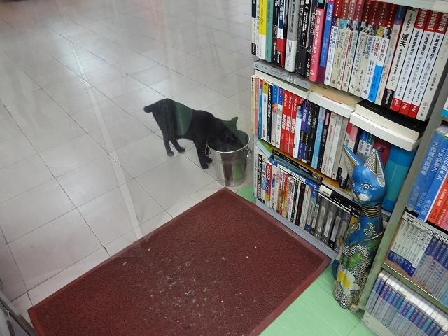 猫天国 森記圖書公司 _b0248150_04542844.jpg