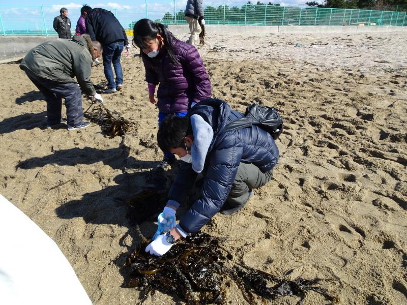みんなでワカメを育てよう!「ワカメ収穫祭り」  in せんなん里海公園_c0108460_00563802.jpg