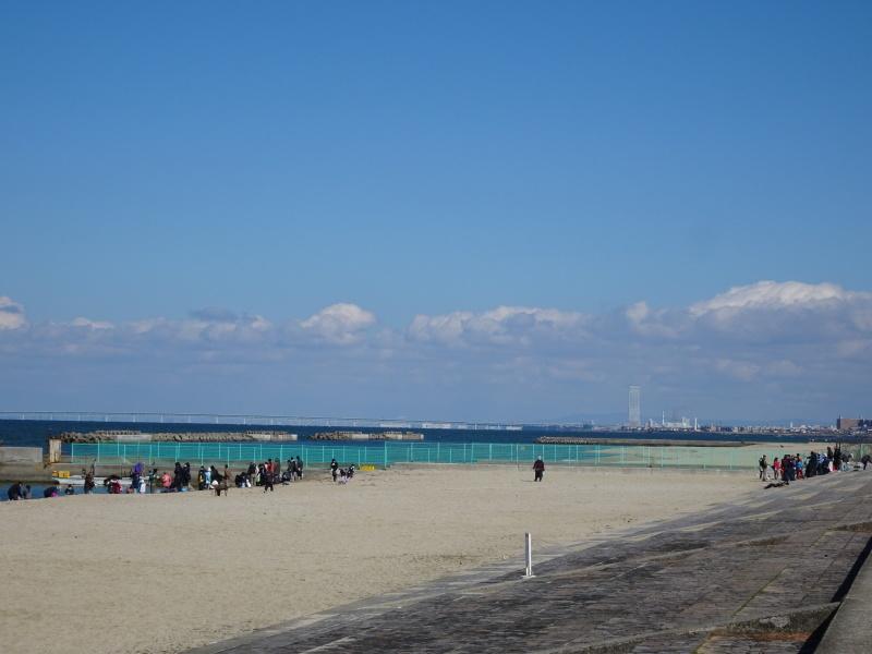 みんなでワカメを育てよう!「ワカメ収穫祭り」  in せんなん里海公園_c0108460_00564601.jpg
