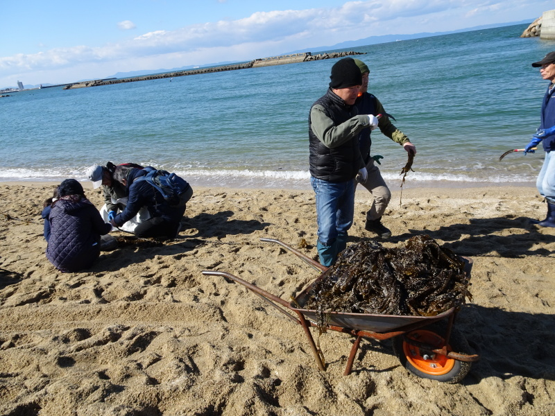みんなでワカメを育てよう!「ワカメ収穫祭り」  in せんなん里海公園_c0108460_00581281.jpg