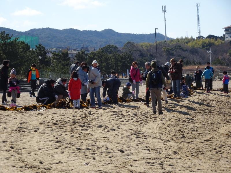みんなでワカメを育てよう!「ワカメ収穫祭り」  in せんなん里海公園_c0108460_01050171.jpg