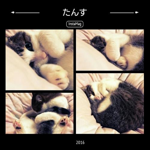 たんす(猫)_b0328361_22015066.jpg