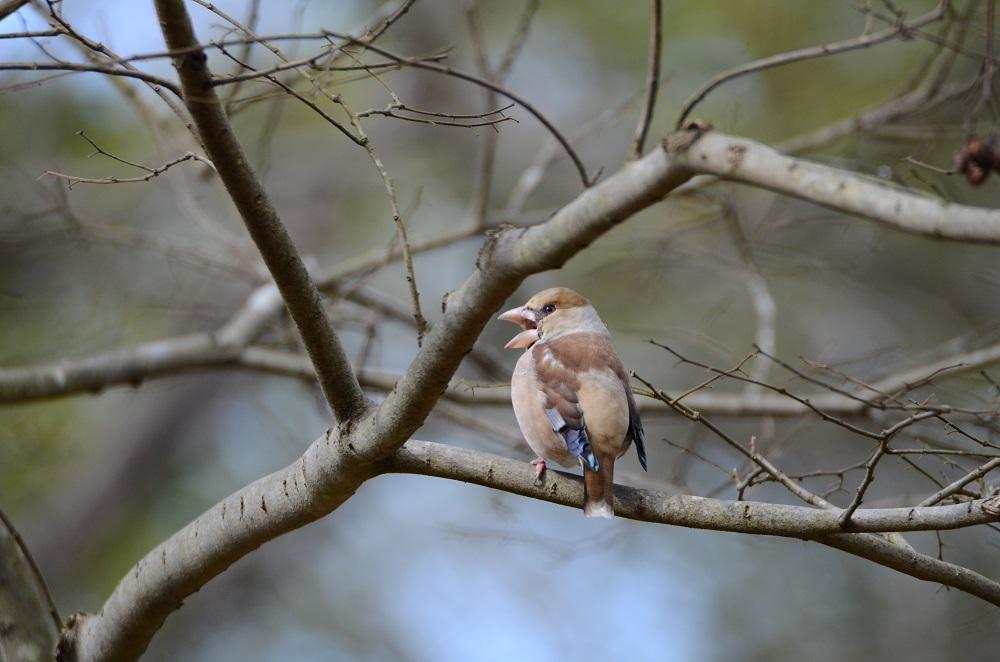 サンショウクイ以外の鳥は_f0088971_2031887.jpg