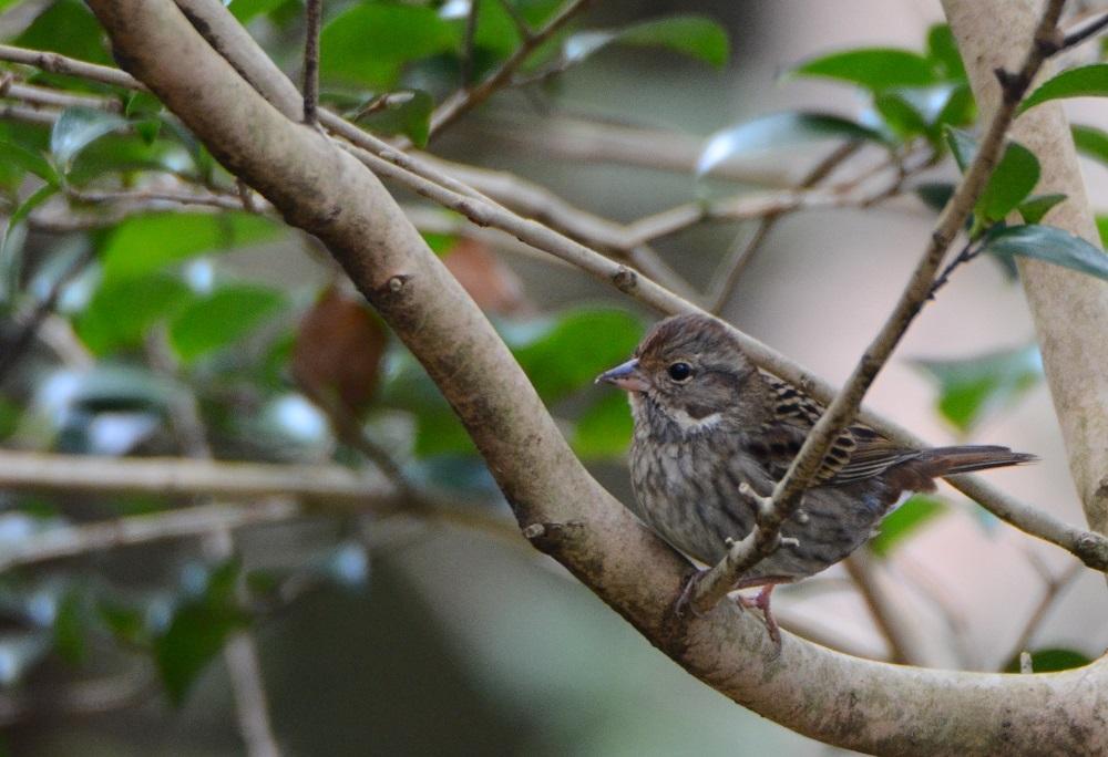 サンショウクイ以外の鳥は_f0088971_20465630.jpg