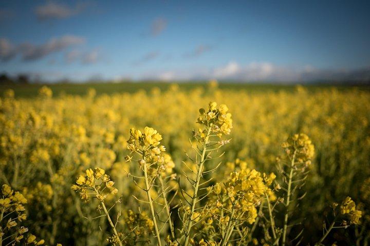 春を待つ牧場_d0353489_20112153.jpg