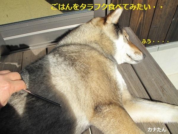 f0143123_10533323.jpg