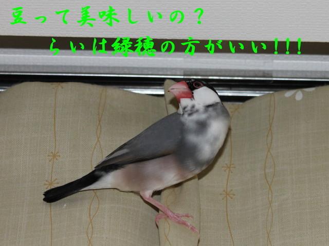 c0365734_22183168.jpg