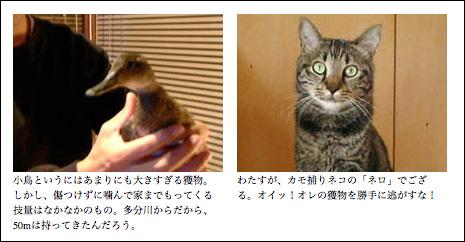 その昔、我家のネロは鴨獲りネコシャンであった。(第356巻)_b0340837_14481569.jpg