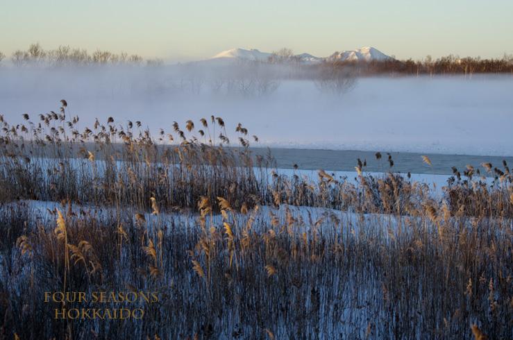 厳寒の美しい朝_f0152939_7161843.jpg