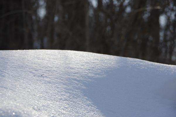 雪いっぱい!_c0341450_12093749.jpg