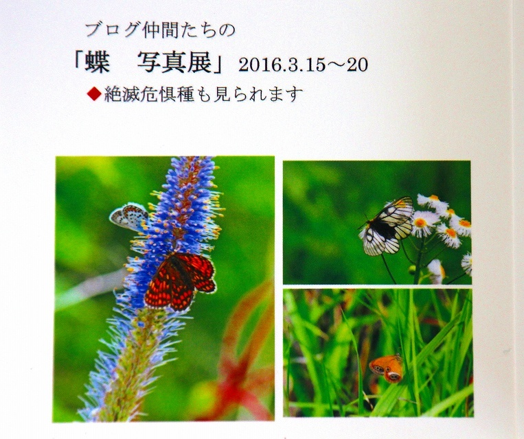 b0320769_20001962.jpg