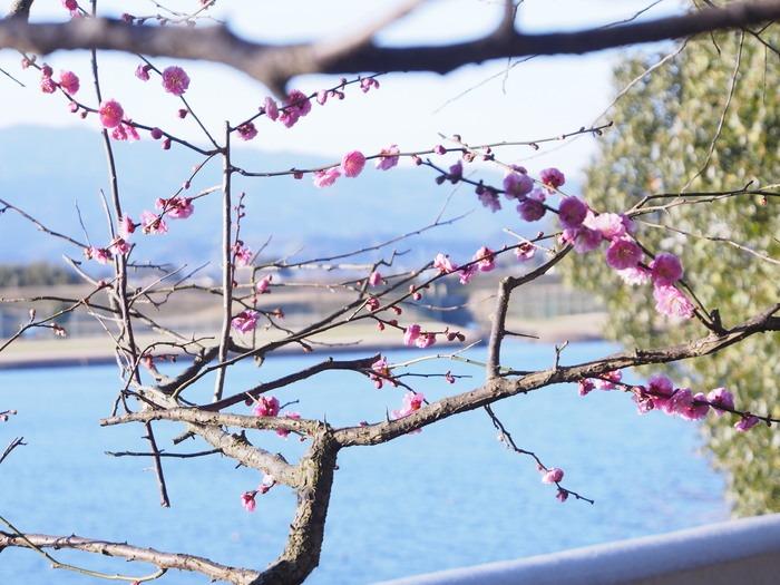 梅林寺の梅の花_a0149488_19174859.jpg