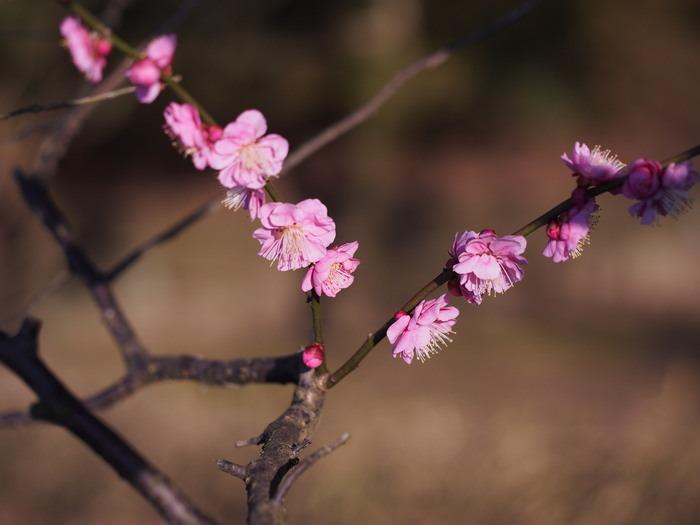 梅林寺の梅の花_a0149488_1918278.jpg