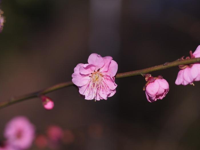 梅林寺の梅の花_a0149488_19183565.jpg