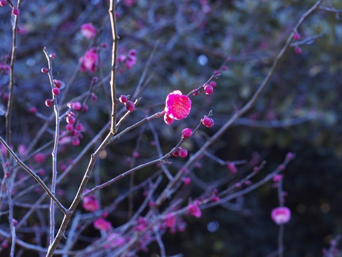 梅林寺の梅の花_a0149488_1919658.jpg