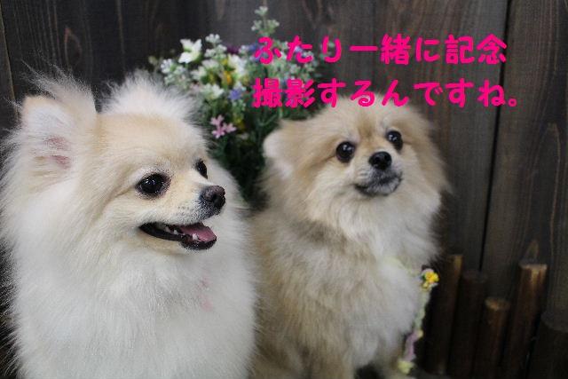 バレンタイン♪_b0130018_16252248.jpg