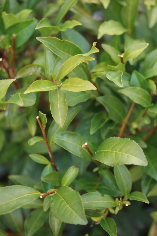 茶LON (30)_b0220318_23105121.jpg