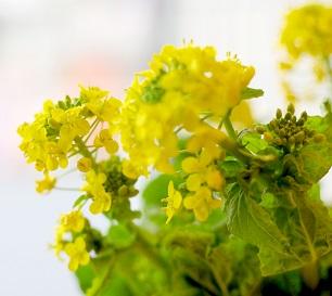 菜の花のピザパン_c0172969_103032.jpg