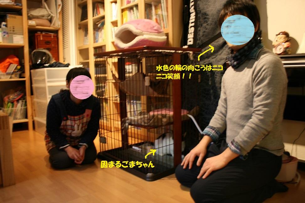 ごまちゃん 新生活スタート!_f0242002_23225352.jpg