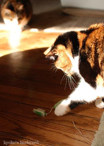 ヘックスバグの猫おもちゃ_b0253205_05221081.jpg