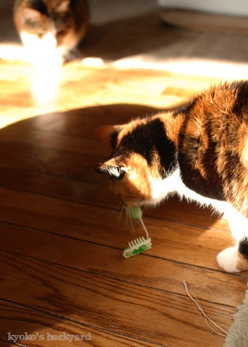ヘックスバグの猫おもちゃ_b0253205_05224187.jpg