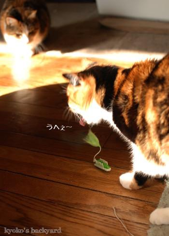 ヘックスバグの猫おもちゃ_b0253205_05231123.jpg