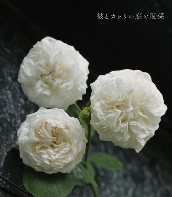 c0365716_10003433.jpg