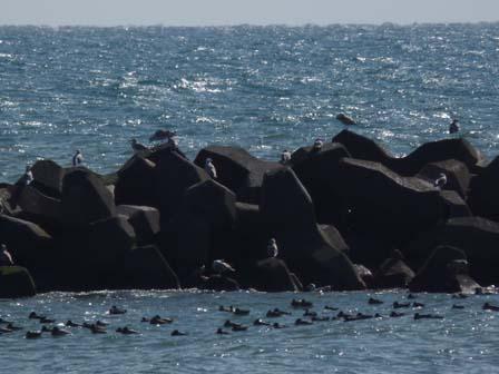 水辺の鳥の観察/紙すきでハガキで作ろう!!_a0123836_17215313.jpg