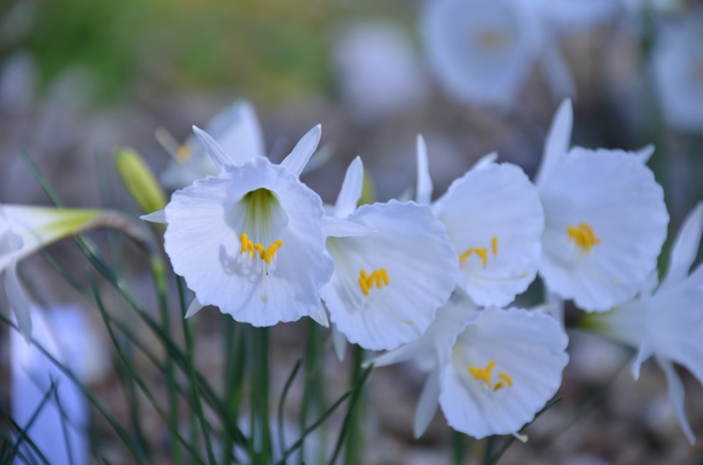 さくやこの花館 Sakuya Konohana Kan_a0290739_21143730.jpg