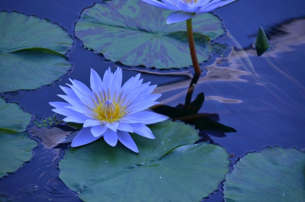 さくやこの花館 Sakuya Konohana Kan_a0290739_21153100.jpg