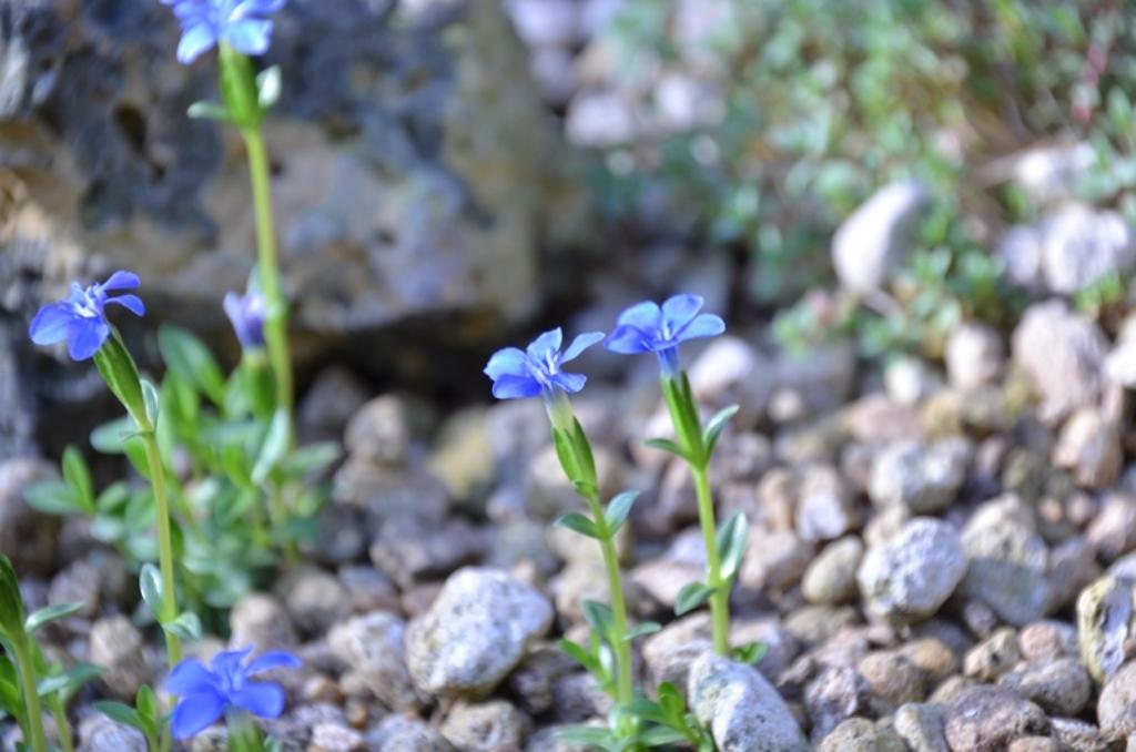 さくやこの花館 Sakuya Konohana Kan_a0290739_21303520.jpg