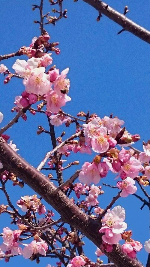 桜が咲きました_d0155439_23172227.jpg