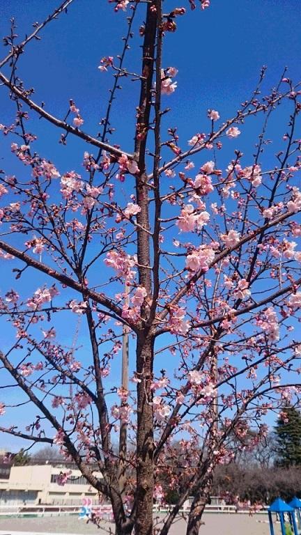 桜が咲きました_d0155439_23213236.jpg