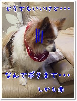 d0013149_20305066.jpg